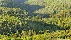 the myth of the wild german forest