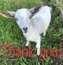 Thank you for helping us celebrate our... - The Vintage Goat and Garden |  Facebook