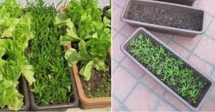 rooftop vegetable gardening design