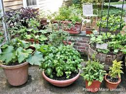 crafty container vegetable gardening