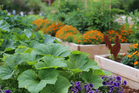 fertilizing vegetable plants