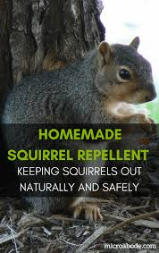 homemade squirrel repellent keeping