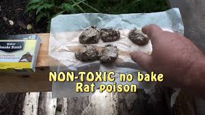 killing rats what works non toxic