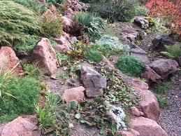 uncommon plants cacti jpg