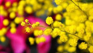 Frasi Festa della Donna: pensieri tradizionali e aforismi tratti ...