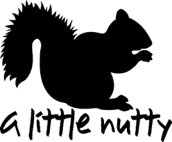 Amazon Com Tgs Topshop A Little Nutty Squirrel Decal Window Bumper Sticker Squirrels Fun Crazy Funny Car Stickers 15cm Kitchen Dining