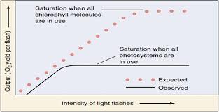 photosynthesis springerlink
