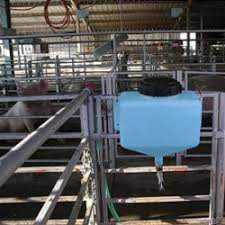 waterers for show pigs show stopper
