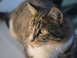 lovely cat free stock photos