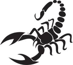 Cool Scorpion Car Decals Stickers Car Stickers