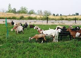Poultry Goat Netting Posts Included Powerfields High Quality Electric Fence