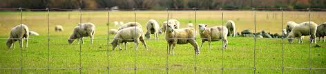 Sheep Goat Fence Protect Your Herd With Wire Fencing