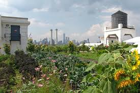 brooklyn grange farm at the navy yard