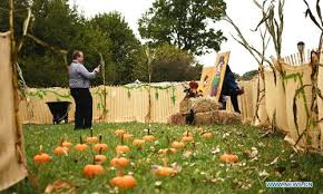Pumpkin Patch Activities Held To Celebrate Autumn Harvest In New York Global Times