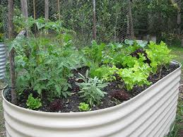 raised garden beds pros and cons