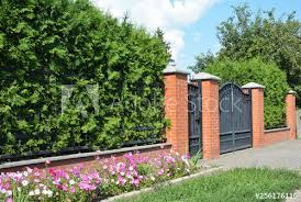 Green Hedges Or Green Fence Design With Metal Door And Metal Garage Gate Green Hedge From Thyja Occidentalis Buy This Stock Photo And Explore Similar Images At Adobe Stock Adobe Stock