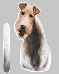 Wire Hair Fox Terrier A