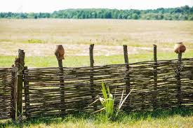 Fence Wicker From The Vine Texture Background Wicker Vine Stock Photo Picture And Royalty Free Image Image 154654889