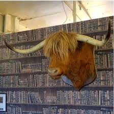 mounted highland cattle head
