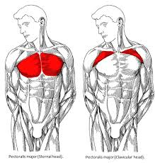 chest workout for m