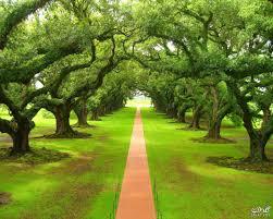 صور خلفيات طبيعية اشجار جميلة ومناظر طبيعية جنان 2020 Tree