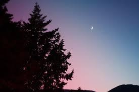crescent moon trees sky fir hd