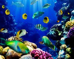 3d live fish wallpaper fish tank