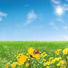 تنزيل صور خلفيات مناظر طبيعية خلابة زهور جميلة صور خلفيات عالية