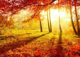Why you can expect a spectacular autumn