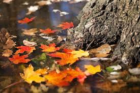 autumn leaves reflection wallpapers