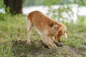 Why Do Dogs Dig Holes In Your Backyard Let S Find Out 2020