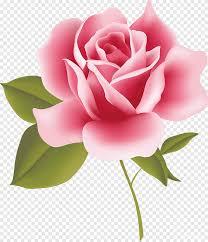 الورود خمر أصناف جميلة للمنزل والحديقة الوردي وردة Floribunda