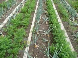kitchen garden wikipedia