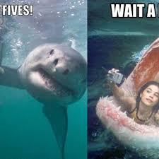 funny shark captions for insram