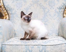 Festa del Gatto, ecco sua maestà