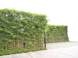 Tall Plants For A Privacy Fence Hunker Backyard Trees Tall Plants Backyard Garden Landscape