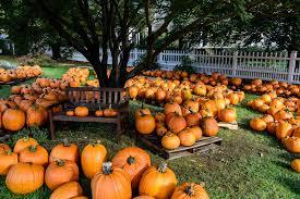 best 37 pumpkin picking wallpaper on