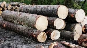 Păduri tăiate ilegal: Aproape 24.000 de metri cubi au dispărut din cinci judeţe ale Moldovei!, Știri Botoșani, Economie - Stiri.Botosani.Ro