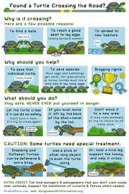 How To Save Turtles Crossing The Road Coolguides