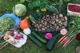 Horta orgânica: saiba como prepará-la de forma fácil | Petz