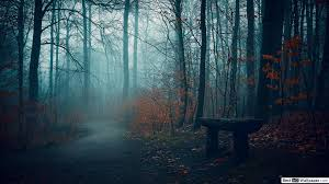 beautiful dark forest hd wallpaper