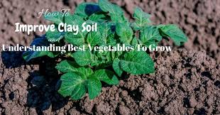 how to improve clay soil and