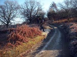 Butterfly Conservation workday on Roborough Common   Conservation,  Volunteering, Walks & Events on Dartmoor