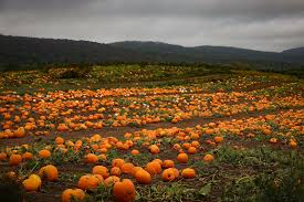 7 Amazing Oregon Pumpkin Patches You Have To Visit in 2019 | That ...