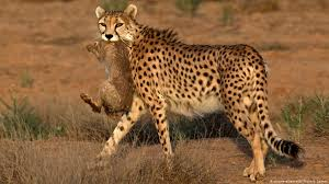 iranian cheetah researchers sentenced
