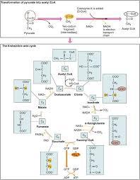 cellular respiration equation types