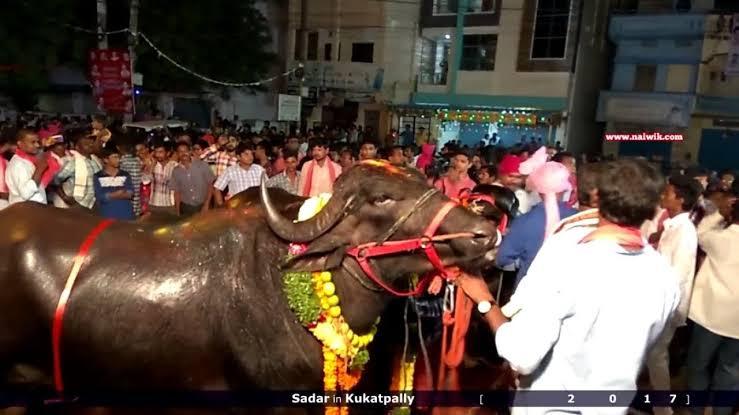"""Image result for sadar festival hyderabad"""""""