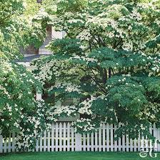 the best small trees better homes
