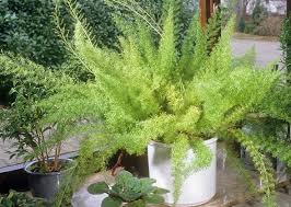 plants that are dangerous to dogs and cats