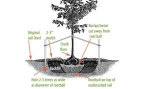 How To Plant A Tree Or Shrub Tree Planting Bushes Gardener S Supply